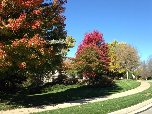 Grand trees changing to autumn colors in Foxfire neighborhood