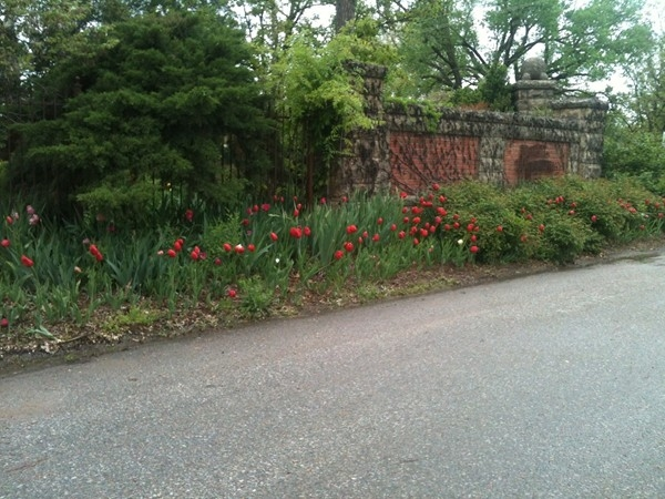 Tulips look great this year at Bartlett Arboretum