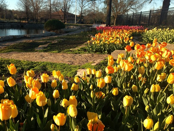 Tulip time in Topeka