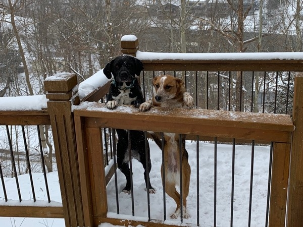 Puppies loving the snow