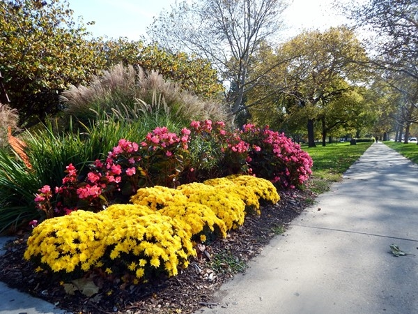 Colorful autumn flowers in South Park