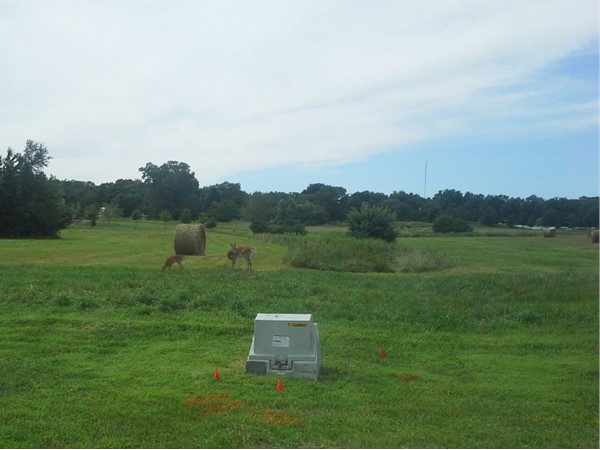 A doe and her fawn happily grazing on a future homesite in McFarland Farm