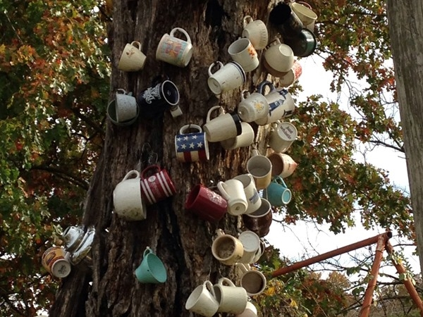 Do you know the story? Another view of the Cup Tree in Gravois Mills