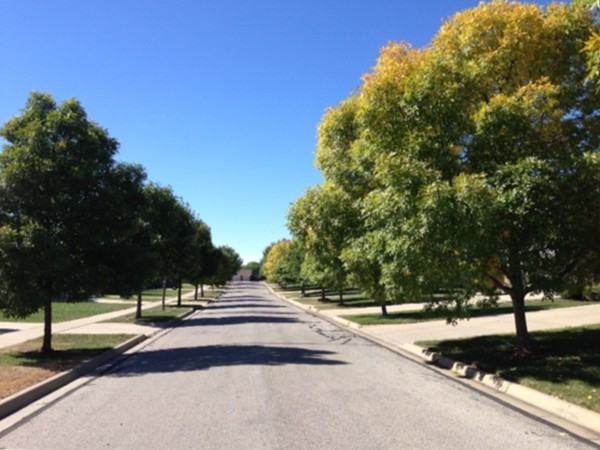 A tree-lined street in the Sunflower Park neighborhood