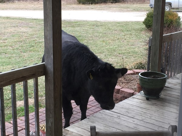 If you live in the country, this might be your visitor someday