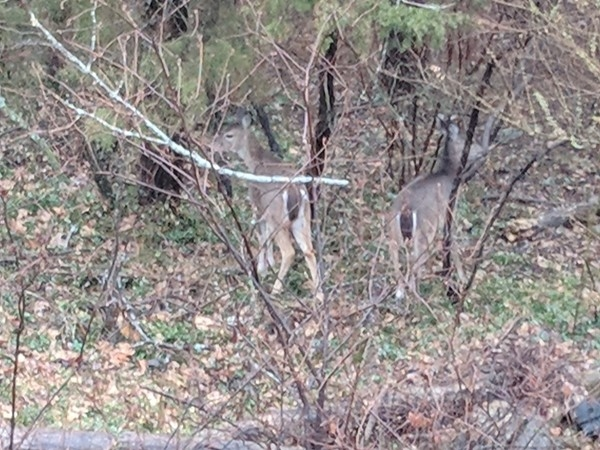 Wildlife in the Ozarks in abundance