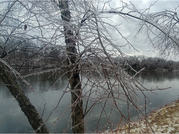 Ice covered branches from the 2019 ice storm at Pertle Springs in Warrensburg