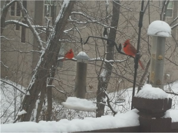 Less than a week ago, it was cold and snowy. The birdies didn't mind