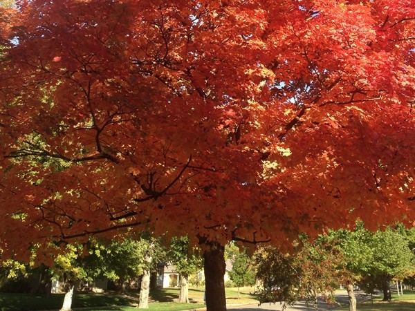 Fall foliage in Hutchinson