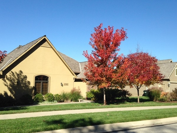 Sun illuminates fall colors in Foxfire neighborhood