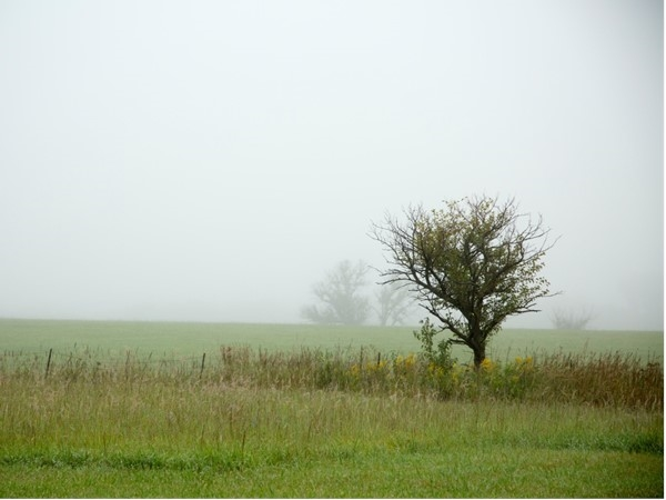 Fog in Flint Hills