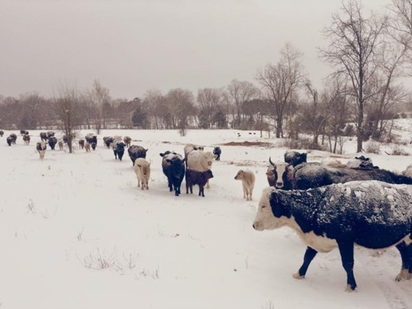 Winter on the farm in the Ozarks