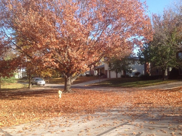 Beautiful fall color in Indian Hills